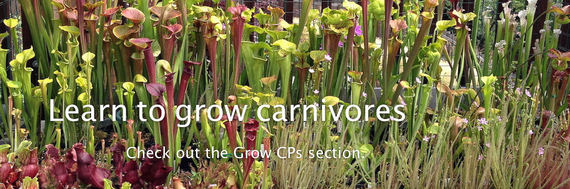 Learn to Grow CPs